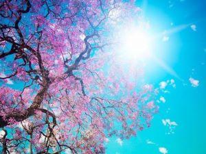 Joyeux rayon de soleil sur un arbre en fleurs roses.
